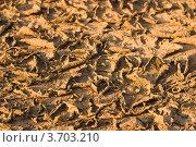 Сухая земля. Стоковое фото, фотограф Константин Примачук / Фотобанк Лори