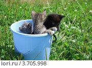 Урожай котят. Стоковое фото, фотограф Арти Homa / Фотобанк Лори