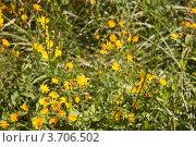 Полевые цветы. Стоковое фото, фотограф Мария Семечкова / Фотобанк Лори