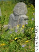 Чабрец на фоне каменной бабы. Стоковое фото, фотограф Олег Брагин / Фотобанк Лори