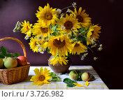 Купить «Натюрморт с подсолнухами и яблоками», фото № 3726982, снято 7 августа 2012 г. (c) Julia Ovchinnikova / Фотобанк Лори
