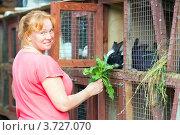 Купить «Женщина-фермер кормит кроликов», фото № 3727070, снято 6 августа 2012 г. (c) Сергей Лаврентьев / Фотобанк Лори