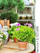 Купить «Магазин для садовода», фото № 3727690, снято 21 мая 2012 г. (c) CandyBox Images / Фотобанк Лори