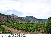 Купить «Плантация винограда в Крыму», фото № 3734602, снято 27 июня 2012 г. (c) Александр  Буторин / Фотобанк Лори