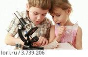 Купить «Мальчик сидит у микроскопа и учит младшую сестру на белом фоне», видеоролик № 3739206, снято 13 августа 2011 г. (c) Losevsky Pavel / Фотобанк Лори
