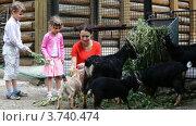 Купить «Мама с детьми кормят козу и козлят на улице», видеоролик № 3740474, снято 3 августа 2011 г. (c) Losevsky Pavel / Фотобанк Лори
