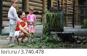 Купить «Мама с детьми кормят козлят на улице», видеоролик № 3740478, снято 3 августа 2011 г. (c) Losevsky Pavel / Фотобанк Лори