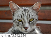 Кошка. Стоковое фото, фотограф Александр Онучин / Фотобанк Лори