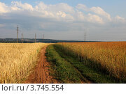 Грунтовая дорога через поле летом. Стоковое фото, фотограф Попова Ольга / Фотобанк Лори
