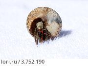 Рак отшельник. Стоковое фото, фотограф Ирина Миночкина / Фотобанк Лори