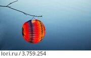 Купить «Бумажный фонарь весит на ветке», видеоролик № 3759254, снято 13 сентября 2011 г. (c) Losevsky Pavel / Фотобанк Лори