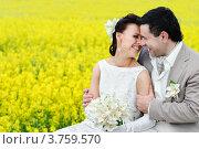 Молодожены в поле с желтыми цветами. Стоковое фото, фотограф Алексей Казнадей / Фотобанк Лори
