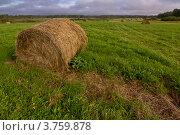 Стог сена в поле. Стоковое фото, фотограф Коршунов Владимир / Фотобанк Лори
