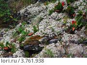 Купить «Склон горы, поросший ягелем и баданом», фото № 3761938, снято 11 августа 2008 г. (c) Анна Омельченко / Фотобанк Лори