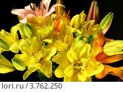 Купить «Букет лилий», фото № 3762250, снято 11 июля 2012 г. (c) Виктор Топорков / Фотобанк Лори