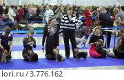 Купить «Выставка собак», видеоролик № 3776162, снято 24 февраля 2012 г. (c) Losevsky Pavel / Фотобанк Лори