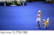 Купить «Выставка собак», видеоролик № 3776190, снято 16 февраля 2012 г. (c) Losevsky Pavel / Фотобанк Лори