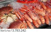 Купить «Много крабов и креветок лежит во лду, вид в движении», видеоролик № 3783242, снято 5 мая 2012 г. (c) Losevsky Pavel / Фотобанк Лори