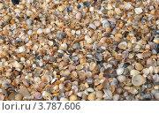 Пляж из ракушек. Стоковое фото, фотограф Анастасия Герасимова / Фотобанк Лори