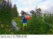 Семилетний мальчик с лейкой на огороде. Стоковое фото, фотограф Надежда Щур / Фотобанк Лори
