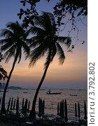 Пальмы на фоне заката. Стоковое фото, фотограф Анастасия Нестерова / Фотобанк Лори