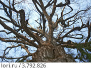 Причудливое дерево на фоне неба. Стоковое фото, фотограф Анастасия Нестерова / Фотобанк Лори