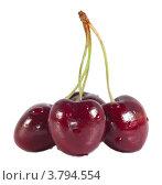 Купить «Ветка вишни на белом фоне», эксклюзивное фото № 3794554, снято 14 июля 2012 г. (c) Литвяк Игорь / Фотобанк Лори