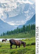 Озеро Аккем, Белуха, лошади пасутся (2012 год). Редакционное фото, фотограф Вячеслав Скоробогатов / Фотобанк Лори