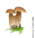 Купить «Двойной гриб на белом фоне», фото № 3811846, снято 2 сентября 2012 г. (c) Ласточкин Евгений / Фотобанк Лори
