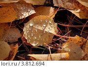 Фон из осенних желтых листьев с капельками дождя. Стоковое фото, фотограф Алексей Макшаков / Фотобанк Лори