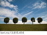 Петергоф. Аллея. Деревья. (2012 год). Стоковое фото, фотограф Артем Кашканов / Фотобанк Лори