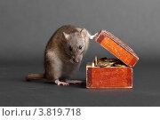 Купить «Крыса и сундук с монетами», фото № 3819718, снято 2 сентября 2012 г. (c) Argument / Фотобанк Лори