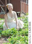 Купить «Счастливая женщина на клубничной грядке», фото № 3820666, снято 29 мая 2011 г. (c) Дарья Филимонова / Фотобанк Лори