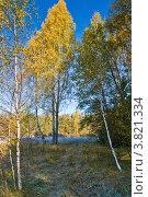 Купить «Заморозки в лесу осенним утром», фото № 3821334, снято 10 октября 2010 г. (c) Ольга Денисова / Фотобанк Лори