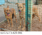 Беспородные собаки в вольере приюта для бездомных животных. Стоковое фото, фотограф Елена Мусатова / Фотобанк Лори