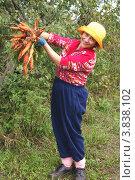 Купить «Вкусная, полезная, прекрасная морковь», фото № 3838102, снято 5 сентября 2012 г. (c) Александр Мишкин / Фотобанк Лори