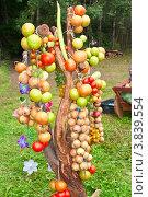 Коряга, украшенная связками спелых овощей. Стоковое фото, фотограф Александр Власик / Фотобанк Лори