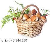 Купить «Белые грибы боровики в корзине на белом фоне», фото № 3844530, снято 28 августа 2012 г. (c) Лисовская Наталья / Фотобанк Лори