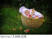 Маленькая девочка-грудничок спит в корзине с яблоками в саду. Стоковое фото, фотограф Вероника Горбова / Фотобанк Лори
