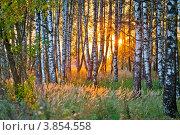 Купить «Осенний закат в березовой роще», фото № 3854558, снято 19 сентября 2012 г. (c) Ольга Денисова / Фотобанк Лори
