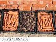 Купить «Собранные овощи», фото № 3857258, снято 22 сентября 2012 г. (c) Елена Таранец / Фотобанк Лори