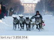 Гонка на оленьей упряжке (2008 год). Редакционное фото, фотограф Юрий Дворников / Фотобанк Лори