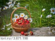 Полная корзина клубники в цветах ромашки. Стоковое фото, фотограф Ольга Денисова / Фотобанк Лори