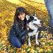 Девушка с собакой породы сибирский хаски (siberian husky) в осеннем парке, фото № 3872242, снято 22 сентября 2012 г. (c) ElenArt / Фотобанк Лори