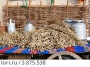 Алтайский хлеб (2012 год). Редакционное фото, фотограф Виктор Четошников / Фотобанк Лори