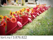 Ряд красных леек с герберами. Стоковое фото, фотограф Елена Круглова / Фотобанк Лори