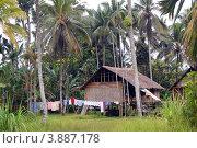 Дом в деревне, Папуа-Новая Гвинея (2011 год). Стоковое фото, фотограф Daniil Nasonov / Фотобанк Лори