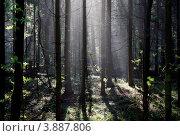Купить «Туманное утро в осеннем лесу», фото № 3887806, снято 7 октября 2011 г. (c) ElenArt / Фотобанк Лори