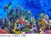 Купить «Коралловый риф в Красном море», фото № 3891190, снято 3 сентября 2012 г. (c) Vitas / Фотобанк Лори