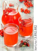 Купить «Морс из калины с сахаром», эксклюзивное фото № 3892882, снято 27 сентября 2012 г. (c) Александр Курлович / Фотобанк Лори